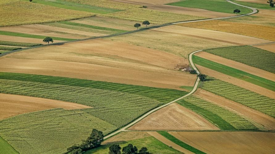 Krajobraz, pola, łąki, droga